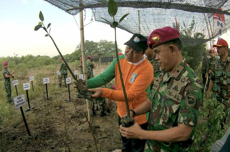 5000 Bibit Mangrove di HUT Ke-15 Pasmar-1