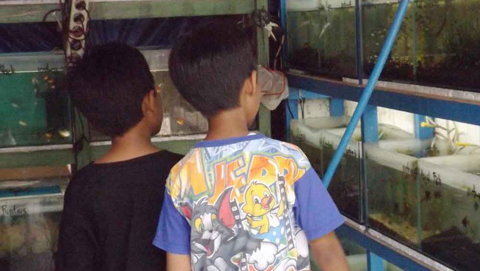Liburan Hemat di Pasar Ikan Hias Gunungsari