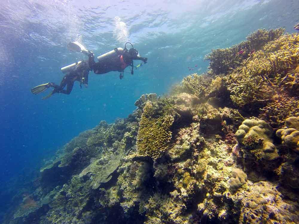 70 Persen Jenis Karang Dunia ada di Indonesia