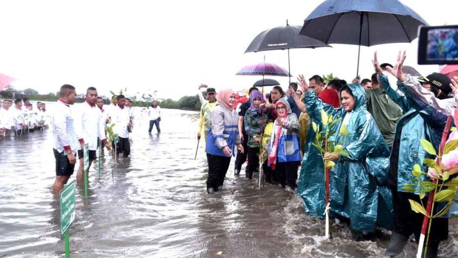 Ibu Negara Tanam Mangrove di Pandeglang