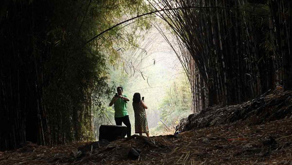 Senyum Menghampar di Hutan Bambu